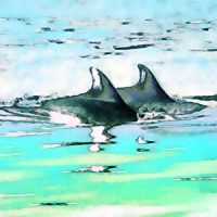 Dolphin Together Essence